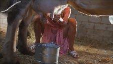 İvana Sert Süt Sağarken