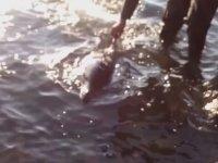 İzmir'de Kıyıya Vuran Yaralı Yunus
