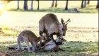Anne Kanguru Öldü Eşi ve Bebeği Yürekleri Parçaladı
