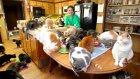 Aynı Evi Paylaşan 1100 Kedi ile Çılgın Kadın