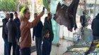 Ağlara Takılan Dev Fener Balıkları Görenleri Şaşkına Çeviriyor