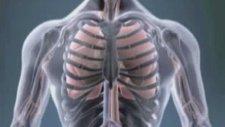 Akciğer kanseri nasıl bir hastalıktır ?