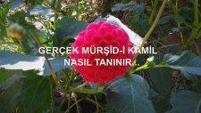 Gerçek Mürşid-İ Kamil Nasıl Tanınır...