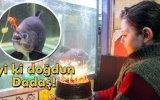 Piranaya Doğum Günü Kutlaması Yapan Erzurumlu