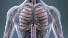 Akciğer kanserinin türleri nelerdir ?