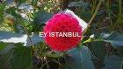 EY İSTANBUL...