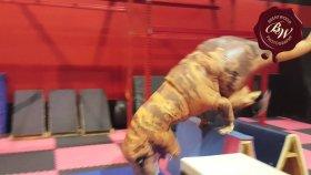 Trex İle Eğlenceli Jurassic Parkour