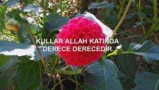 KULLAR ALLAH KATINDA DERECE DERECEDİR...