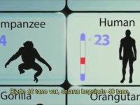 Kalıcı Bir Damga: İnsanın Evrimsel Geçmişi