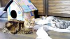 The Longest Toy For Funny Cats  And Kittens - Part 1 / Kedi Videolari
