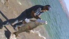 Keban Barajı'nda Yakalanan Büyük Balık