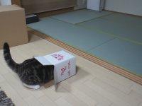 Bonzaici Kedi