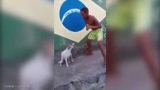 Samba Yapan Köpek Kırdı Geçirdi