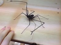 Örümcekle Gencin ilginç Oyunu!