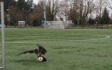 Futbol Topu İle Cebelleşen Kartal