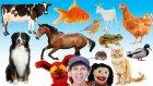 What Do You See? Song | Animals and Sounds | Ne Görüyorsun? Şarkısı | Hayvanlar ve Sesler