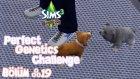 The Sims 3 - Mükemmel Genetik Özellikleri - Bölüm 19 - Tek Bırakmayalım İstemiştim :(
