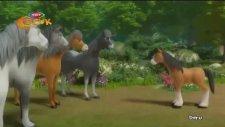 Yılkı Atı Doru - Alaca