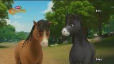 Yılkı Atı Doru - Kuzu