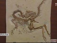 Celâl Şengör'ün Kütüphânesi ve Fosil Koleksiyonu