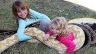 Çocukların 5 Metrelik Piton Yılanı ile Tehlikeli Oyunu