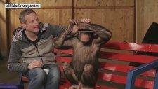 Şempanzenin İllüzyona Verdiği Tepkiler