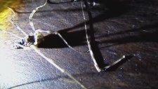 Sahibini Tanıyan Kopan Bacak - Böcek Reis