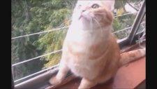 The Best Funny Cat Videos Compilation :) En Komik Kedi Videoları #2