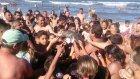 Yavru Yunusu Selfie Uğruna Susuzluktan Öldürdüler