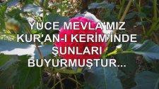 Yüce Mevla'mız Kur'an-I Kerim'inde Şunları Buyurmuştur...