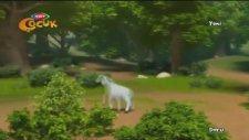 Doru Çizgi Filmi - Kuzu