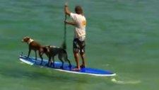 Köpekler De Sörf Yapar