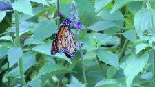 Kelebeğe Dönüşüm