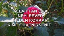 Allah'tan Çok Neyi Sever, Neden Korkar, Kime Güvenirseniz...