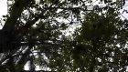 Ev Bezgini Sri Lanka'da Maymunlarla...  - Evbezgini
