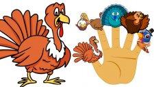 Finger Family Turkey Family  - Thanksgiving Finger Family Songs