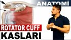 Rotator Manşet Kasları Anatomisi | Rotator Cuff