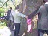 Bursa Ulu Çınar