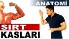 Yüzeyel Sırt Kasları Anatomi - Hakan Fitness