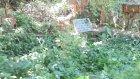 Ağaçköyde Gerçek Şehit Mezarları Kurtuluş Savaşı Şehidi Habib Akalın
