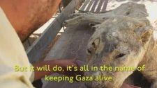 İsrail Zulmünün Tablosu