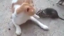 Kedinin Kuyruğuna Fare Bağlamak