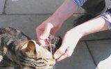 Anne Kedinin Yavrusunu Koruma İçgüdüsü