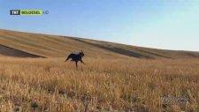 Anadolu'nun En Ünlü 5 Köpeği - Belgesel Günlüğü