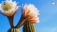 Bitkilerin Enerji Fabrikasındaki İnce Detaylar - Yaşam Kaynağı Fotosentez Belgeselinden.