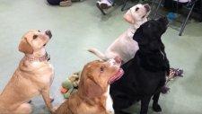 4 Yıl Aradan Sonra Farklı Ailelere Sahiplendirilen Yavru Köpekler Buluştu