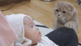İlk Kez Bebek Gören Kediler