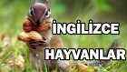 İngilizce Hayvanlar - İngilizce Hayvanlarin İsimleri