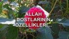 Allah Dostlarının Özellikleri...