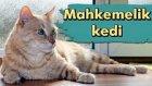 Mahkemeden Kediye Tahliye Kararı
